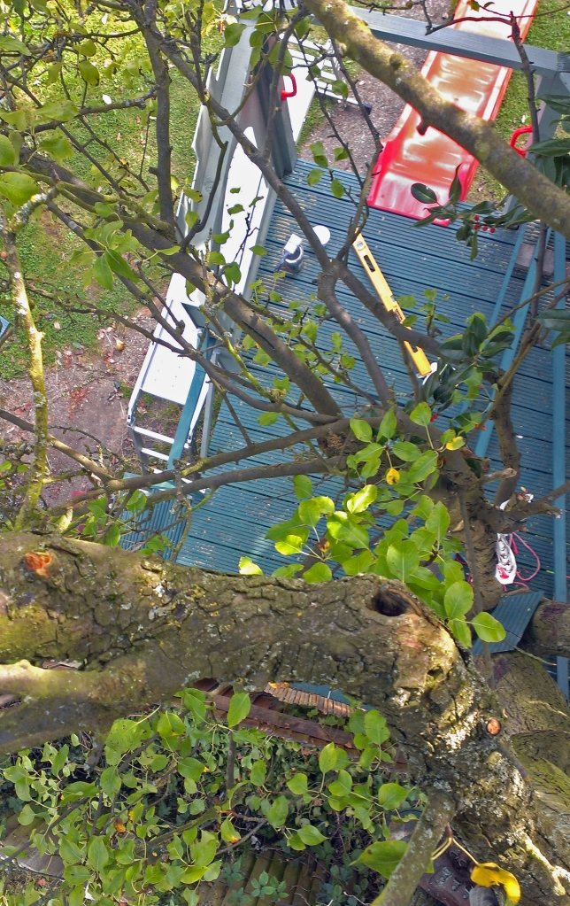 Looking down at the treehouse from the middle of the pear tree
